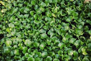 textuur van de planten met waterdruppels in zonlicht foto