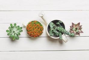 miniatuur vetplanten foto