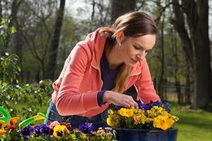 pot met bloemen planten foto