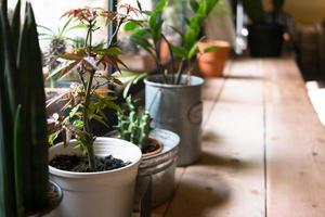 kleine plantpot weergegeven in het venster foto