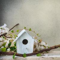 vogelhuisje foto