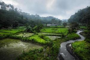 gebied van rijst foto