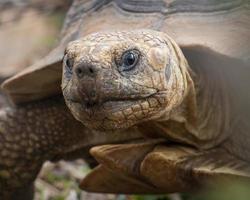 portret van schildpad