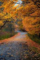 herfstbladeren die een weg bedekken foto