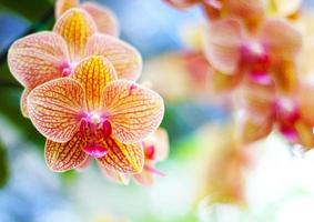 prachtige orchideeën
