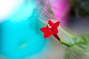 kleine rode bloem op kleurrijke achtergrond