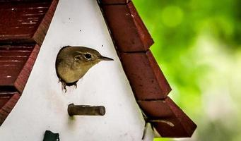 vogel in vogelhuisje foto