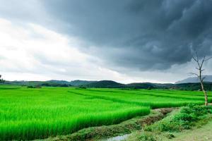 rijstvelden en storm