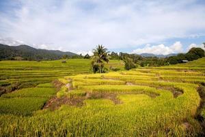 groen terrasvormig rijstveld