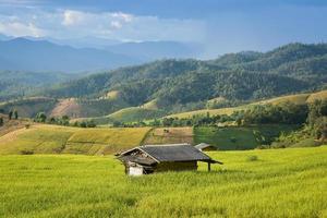 hut in rijstveld
