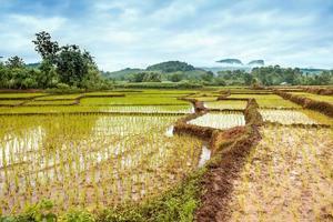 voetpad in de rijstvelden foto