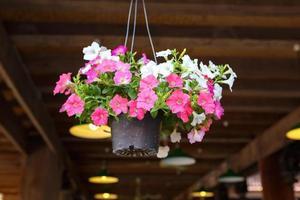 kleurrijke petunia bloem onder huis foto