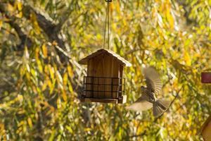 vogel die naar vogelhuis vliegt foto