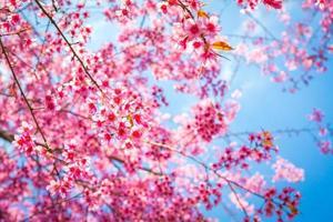 mooie roze bloembloesem