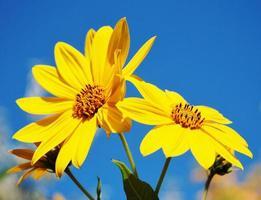 gele bloemen in de zon foto