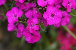 mooie bloemen foto