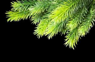 kerstboom geïsoleerd op de zwarte achtergrond foto