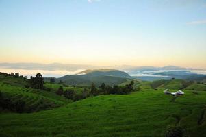 rijstvelden in de ochtend foto