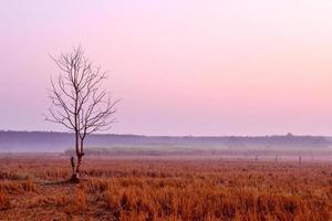eenzame stervende boom bij zonsopgang foto
