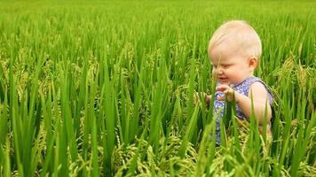 klein meisje in het rijstveld