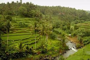 ubud, rijstterrassen op Bali