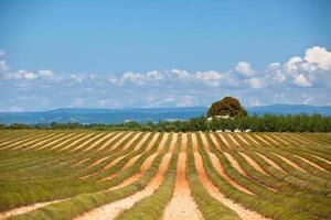 landelijk huis in een geoogste lavendelveld foto