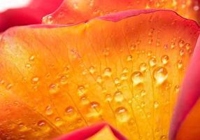 druppels dauw op een bloem
