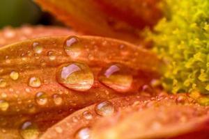 druppels over bloem