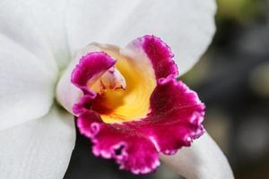 roze orchideeën foto