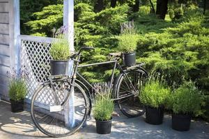 retro fiets versierd met lavendel door tuinhuis foto