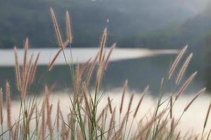 stengels van gras op de natuur foto