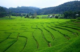 rijstvelden op terrasvormige heuvels