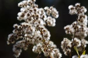 verzameling van witte boren te wachten op een herfst struik