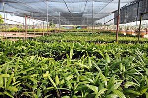 palm zaailingen. foto