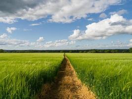 voetpad door een tarweveld foto