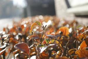 heldere herfst