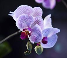 prachtige orchideeën foto