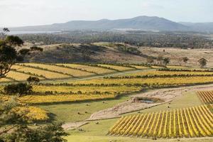 oesterbaai wijngaarden