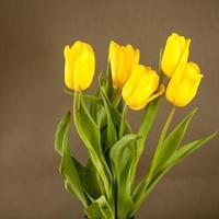gele tulpen op een grijze ondergrond