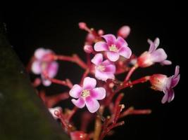 roze orchidee op zwarte achtergrond