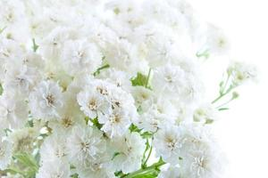 mooie achtergrond gemaakt door witte bloemen