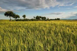 platteland uitzicht op de weilanden en akkers