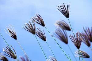riet bloem achtergrond. foto
