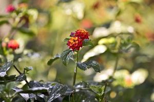 kleurrijke bloem