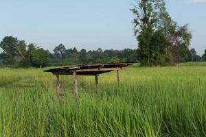 rijst boerderij