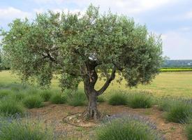 boerderij in de provence foto