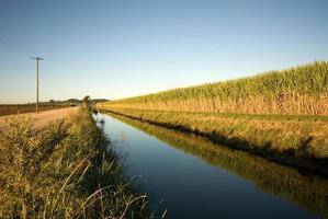 suikerriet boerderij foto