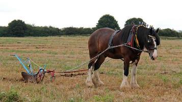 vintage landbouwploeg.