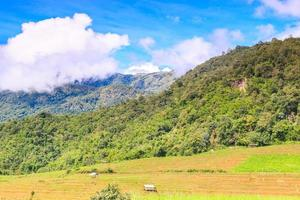 landbouw boerderij rijst