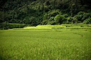rijstboerderij in Kengtung foto